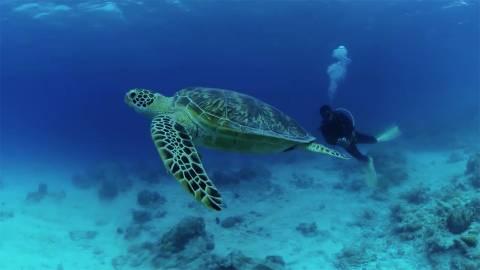 360VR 沖縄ダイビング