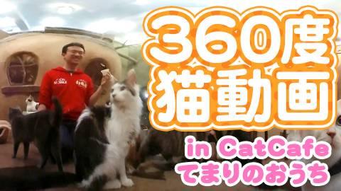 【マックスむらい】360度猫動画inCatCafeてまりのおうち